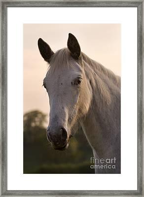 The Horse Portrait Framed Print by Angel  Tarantella