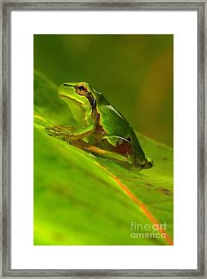 Tree Frog Framed Print by Odon Czintos