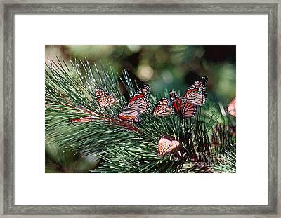 Butterflies Framed Print by Marc Bittan
