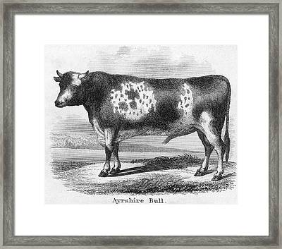 Cattle, 19th Century Framed Print by Granger