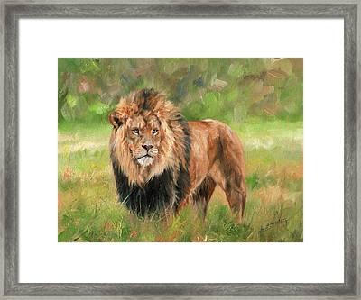 Lion Framed Print by David Stribbling