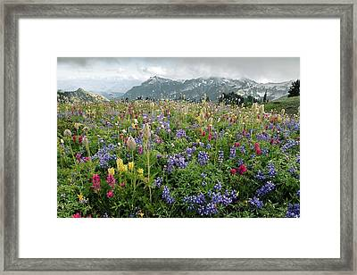Wildflower Meadow Framed Print by Bob Gibbons