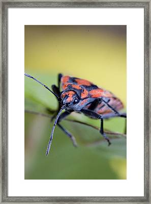 Bug Framed Print by Andre Goncalves