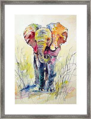 Elephant Framed Print by Kovacs Anna Brigitta