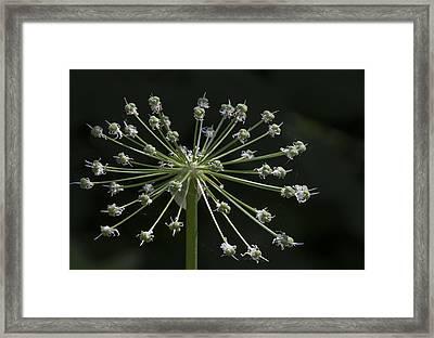 Pincushion Framed Print by Robert Ullmann