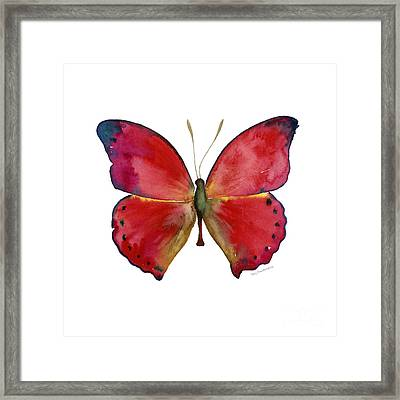 83 Red Glider Butterfly Framed Print by Amy Kirkpatrick