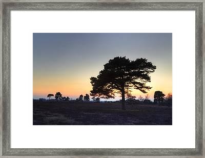 New Forest - England Framed Print by Joana Kruse