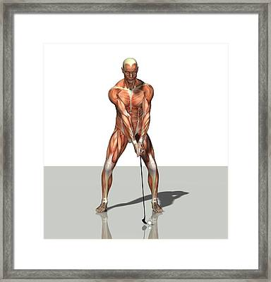 Male Muscles, Artwork Framed Print by Friedrich Saurer