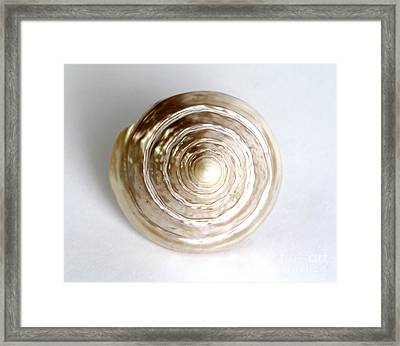 Seashell Framed Print by Photo Researchers