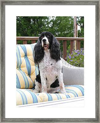 #940 D1035 Farmer Browns Springer Spaniel Framed Print by Robin Lee Mccarthy Photography