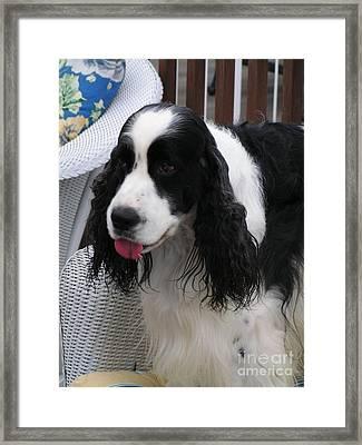 #940 D1039 Farmer Browns Springer Spaniel Fresh Framed Print by Robin Lee Mccarthy Photography