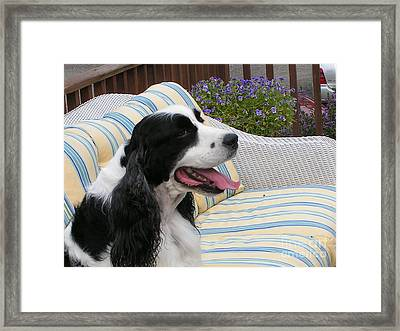 #940 D1067 Farmer Browns Happy Framed Print by Robin Lee Mccarthy Photography