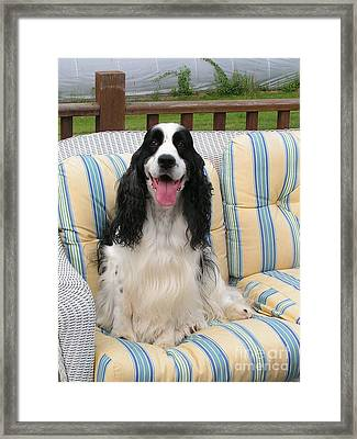 #940 D1074 Farmer Browns Happy For You Framed Print by Robin Lee Mccarthy Photography