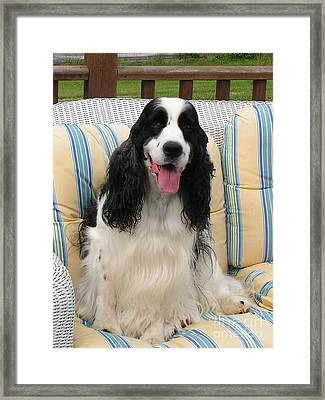 #940 D1076 Farmer Browns Happy For You Framed Print by Robin Lee Mccarthy Photography