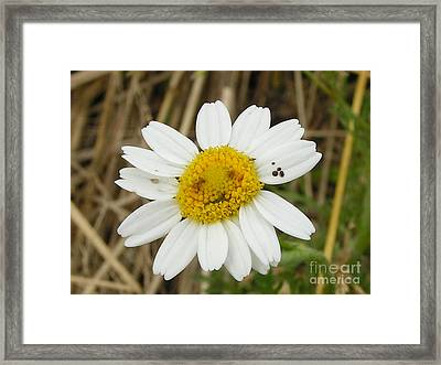 #940 D1115 Farmer Browns West Newbury Grin And Bear It Framed Print by Robin Lee Mccarthy Photography