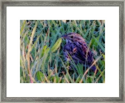 #9424 Spring Sparrow Framed Print by Barbara Tristan