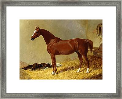 A Bay Racehorse In A Stall, 1843 Framed Print by John Frederick Herring Snr