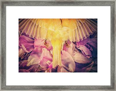 A Beautiful Goodbye Framed Print by Amy Weiss