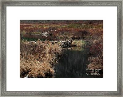 A Beaver's Work Framed Print by Skip Willits
