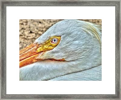 A Bird's Eye View Framed Print by Michael Garyet
