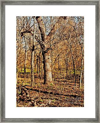 A Bottomland Pecan Framed Print by Gary Richards