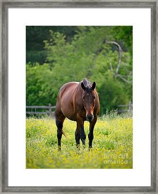 A Brown Horse Framed Print by Rachel Morrison