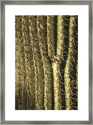A Cactus From The Omaha Zoos Desert Framed Print by Joel Sartore