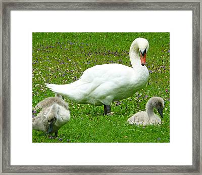 A Caring Mother Framed Print by Daniel Csoka