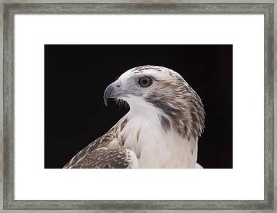 A Close-up Of A Kriders Red-tailed Framed Print by Joel Sartore