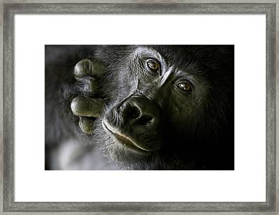 A Close Up Portrait Of A Mountain Framed Print by Michael Poliza