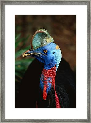 A Close View Of A Cassowary Framed Print by Tim Laman