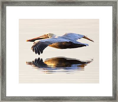 A Closer Look Framed Print by Janet Fikar