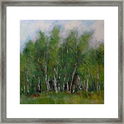 A Cluster Of Birch Framed Print by David Patterson
