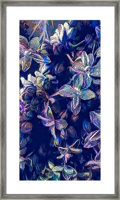 A Cobalt Flash Of Floral Framed Print by Jo-Anne Gazo-McKim
