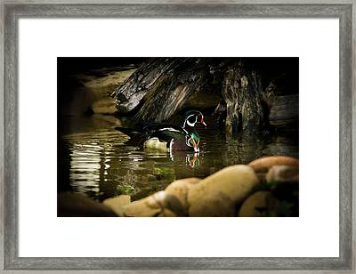 A Cold Drink - Wood Ducks Framed Print by TL Mair