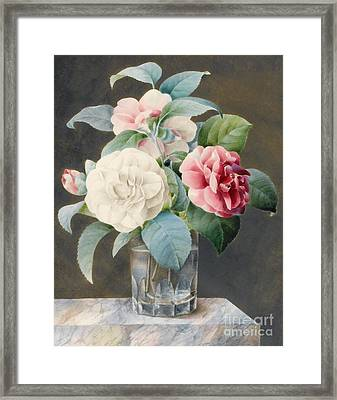 A Cut Glass Vase Containing Camelias Framed Print by Sarah Bray
