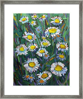 A Daisy A Day Framed Print by Phil Chadwick