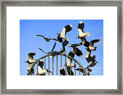 A Deceit Of Lapwings. Framed Print by Stan Pritchard