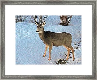 A Deer Friend Framed Print by Al Bourassa