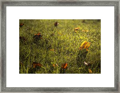 A Difference Of Opinion Framed Print by Chris Fletcher