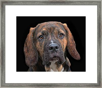 a dog named Lucifer Framed Print by Joachim G Pinkawa