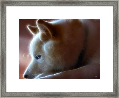 A Dogs Life Framed Print by Stuart Turnbull