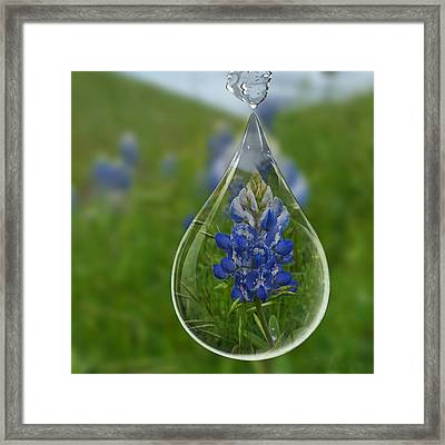 A Drop Of Texas Blue Framed Print by ARTography by Pamela Smale Williams
