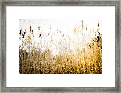 A Faded Memory Framed Print by Colleen Kammerer