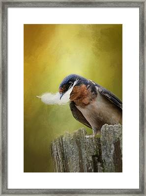 A Feather For Her Nest Framed Print by Jai Johnson