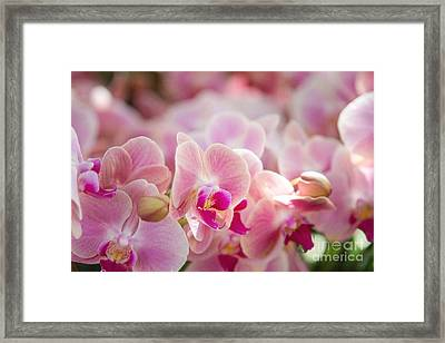 A Field Of Flowers Framed Print by A New Focus Photography