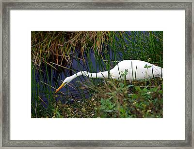 A Fishing We Will Go Framed Print by Marty Koch
