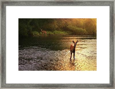 A Fleeting Moment Framed Print by Rob Blair