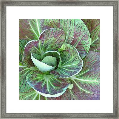 A Floral I Framed Print by Gary Everson