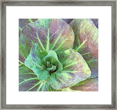 A Floral IIi Framed Print by Gary Everson